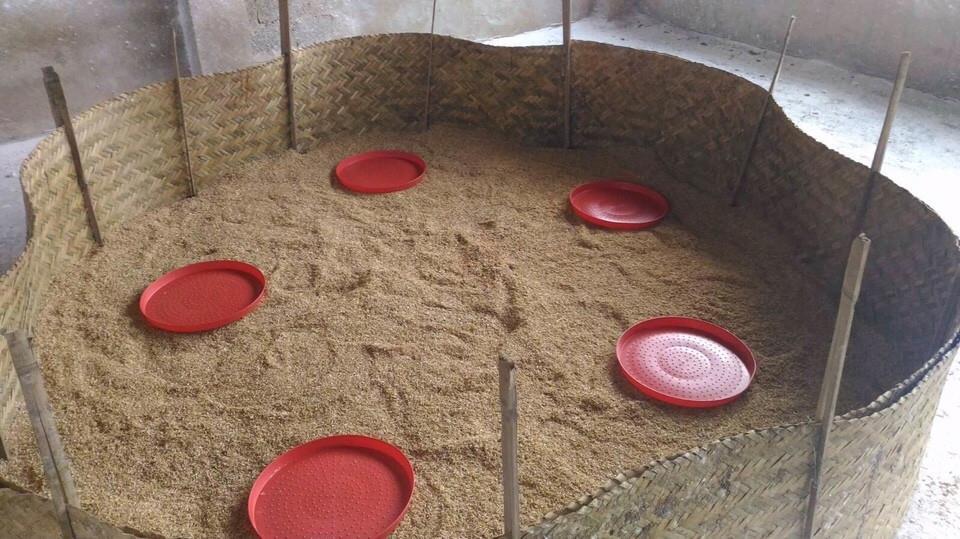 Chất độn lót chuồng úm gà hiệu quả nhất là mùn cưa và vỏ trấu