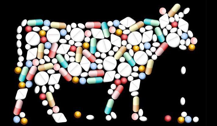 Lạm dụng kháng sinh gây hại cho vật nuôi