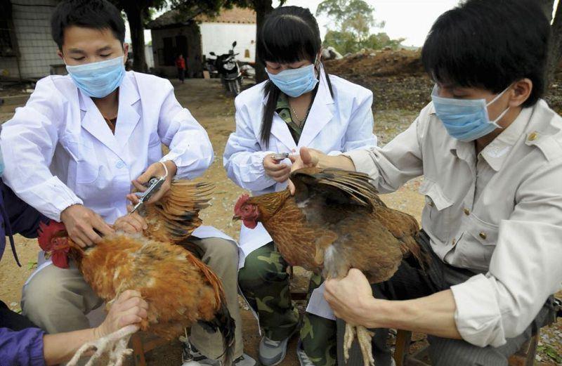 lịch tiêm phòng vắc xin cho gà thịt
